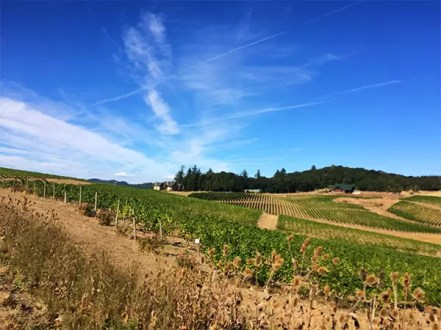 Willamette Valley Vineyards, Turner, OR